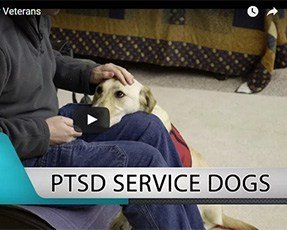 PTSD Service Dogs for Veterans